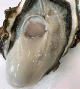 Oyster_170215_2