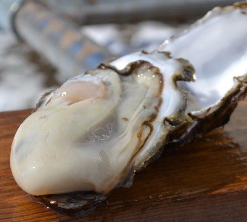 牡蠣が美味しい時期です!