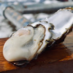 oyster