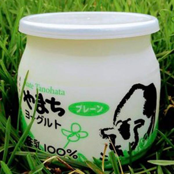 yogurt_yamachi