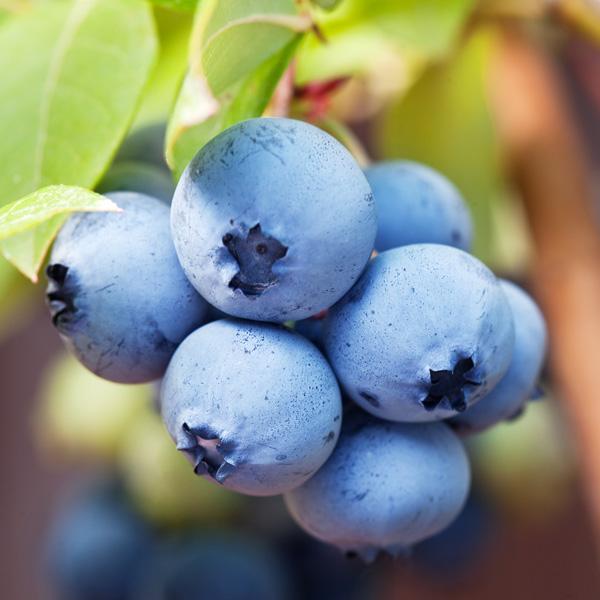 morioka-fruits-set
