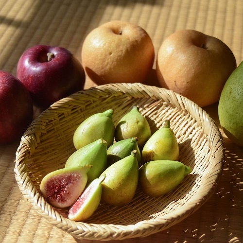 morioka-fruits-set